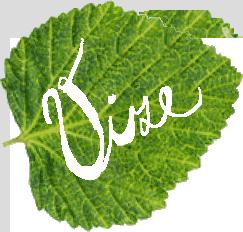 01-vize-leaf