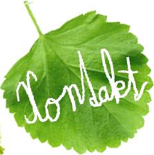 08-kontakt-leaf